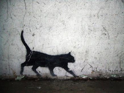 Gato - Imagen pública