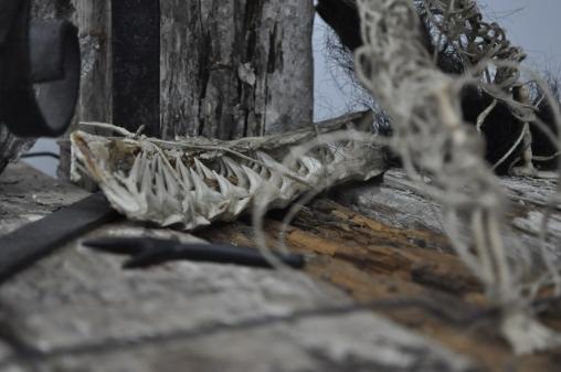 13 Calacas y dos muertos - Fotografía por Jessica Tirado