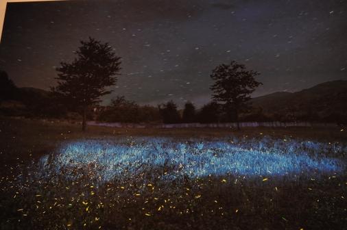 Noches cromáticas - Fotografía por Jessica Tirado Camacho